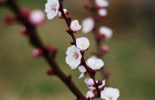 © Groupe ZUR - La haie fruitière - croissance- mars 2019